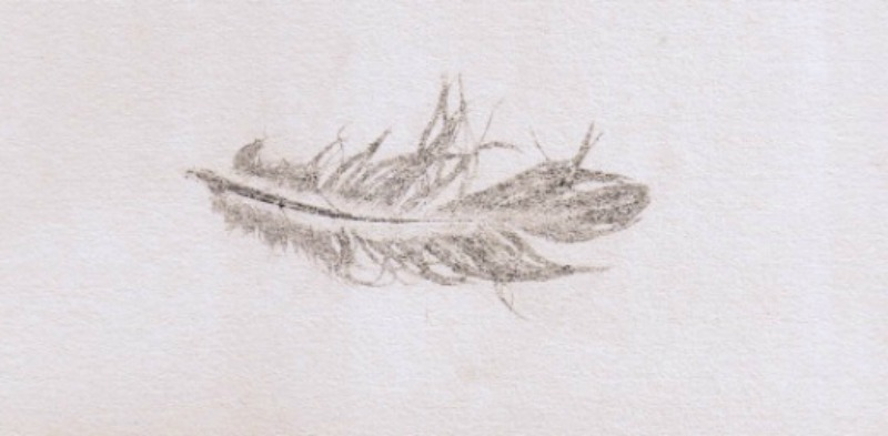 One feather 2012