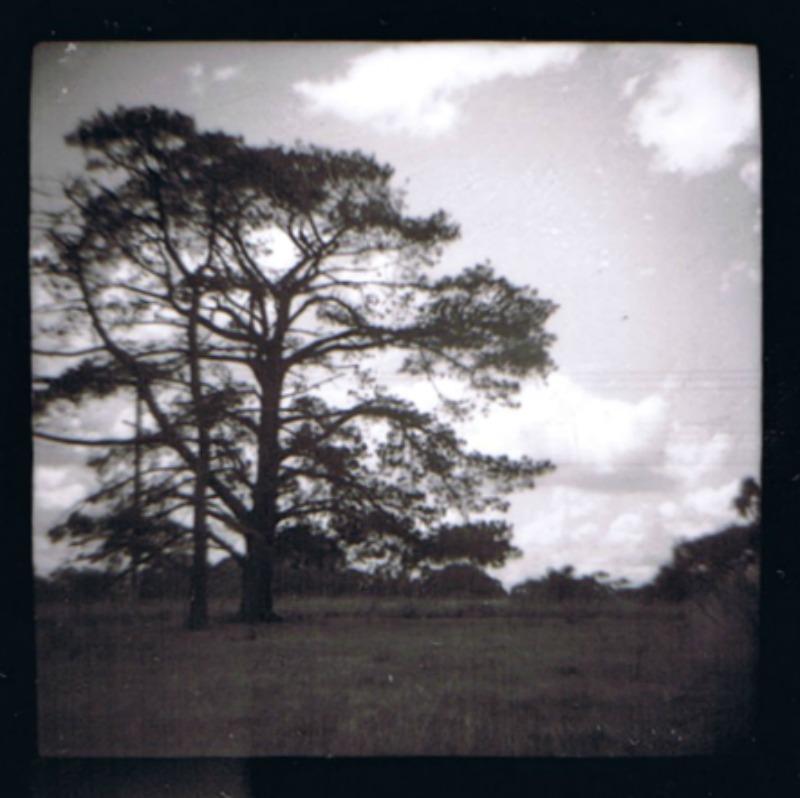Diana trees 2012